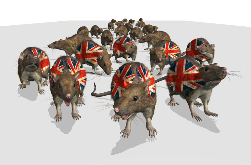 THe Tory Rat Race